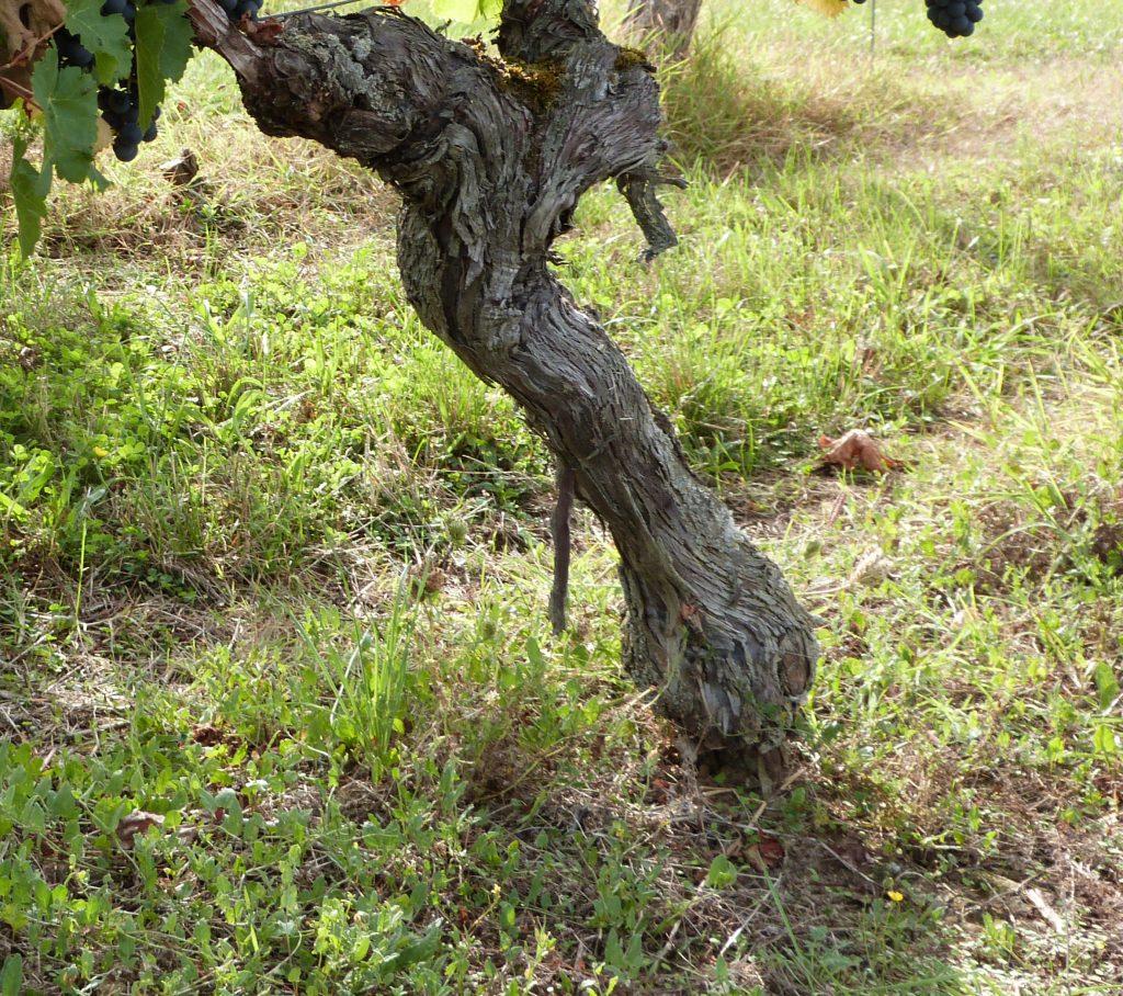 Vineyards to sell of 2.5 HA - bordeaux-en