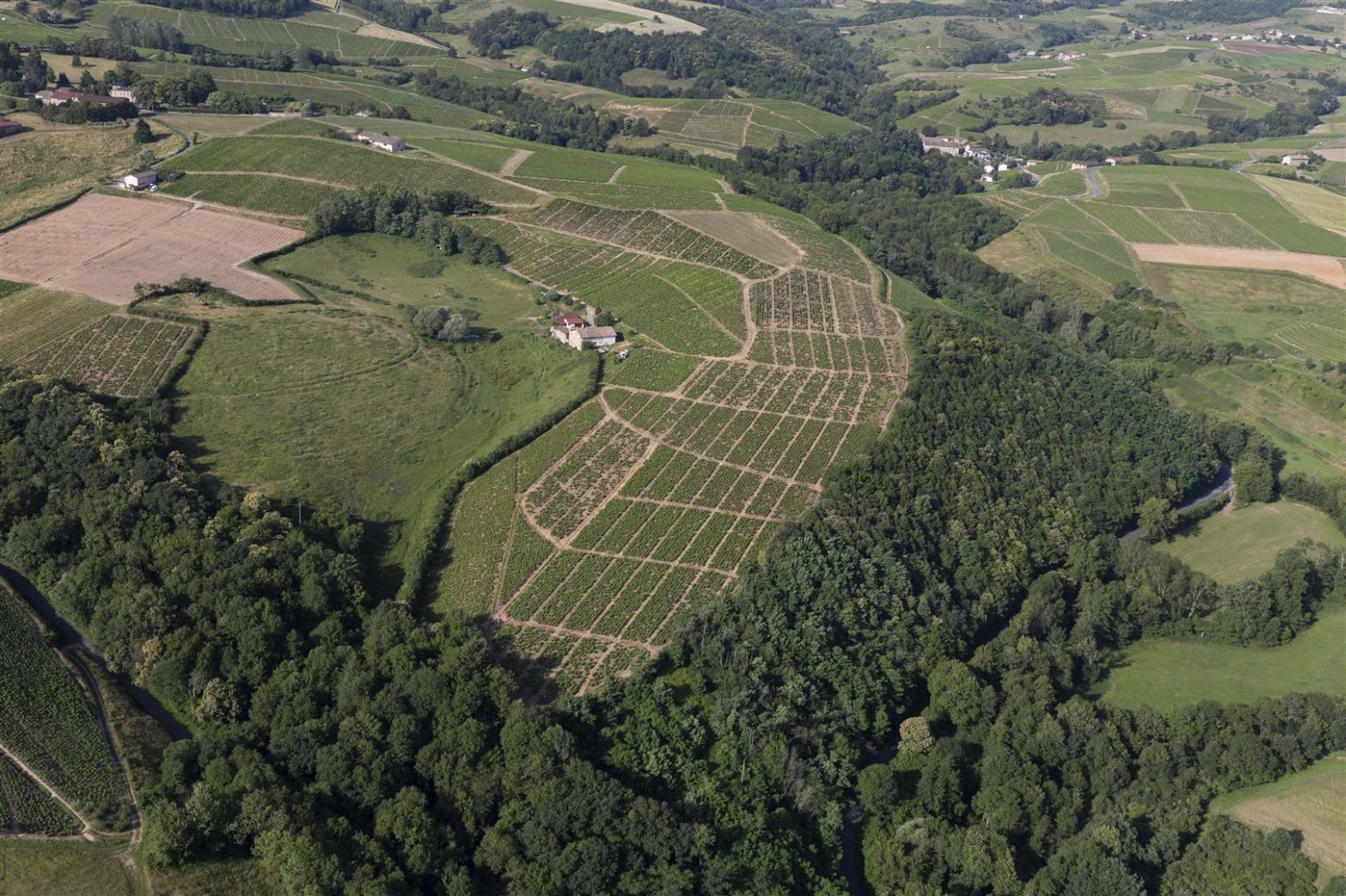 Vineyards to sell of 3.3 HA - beaujolais-en