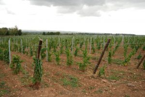 Vineyards to sell of 5.59 HA - beaujolais-en