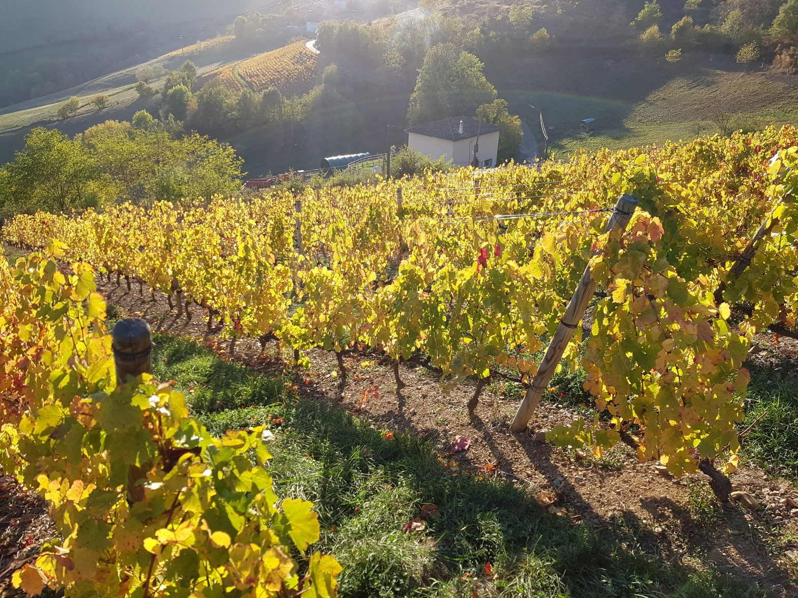 Vineyards to sell of 5.65 HA - beaujolais-en