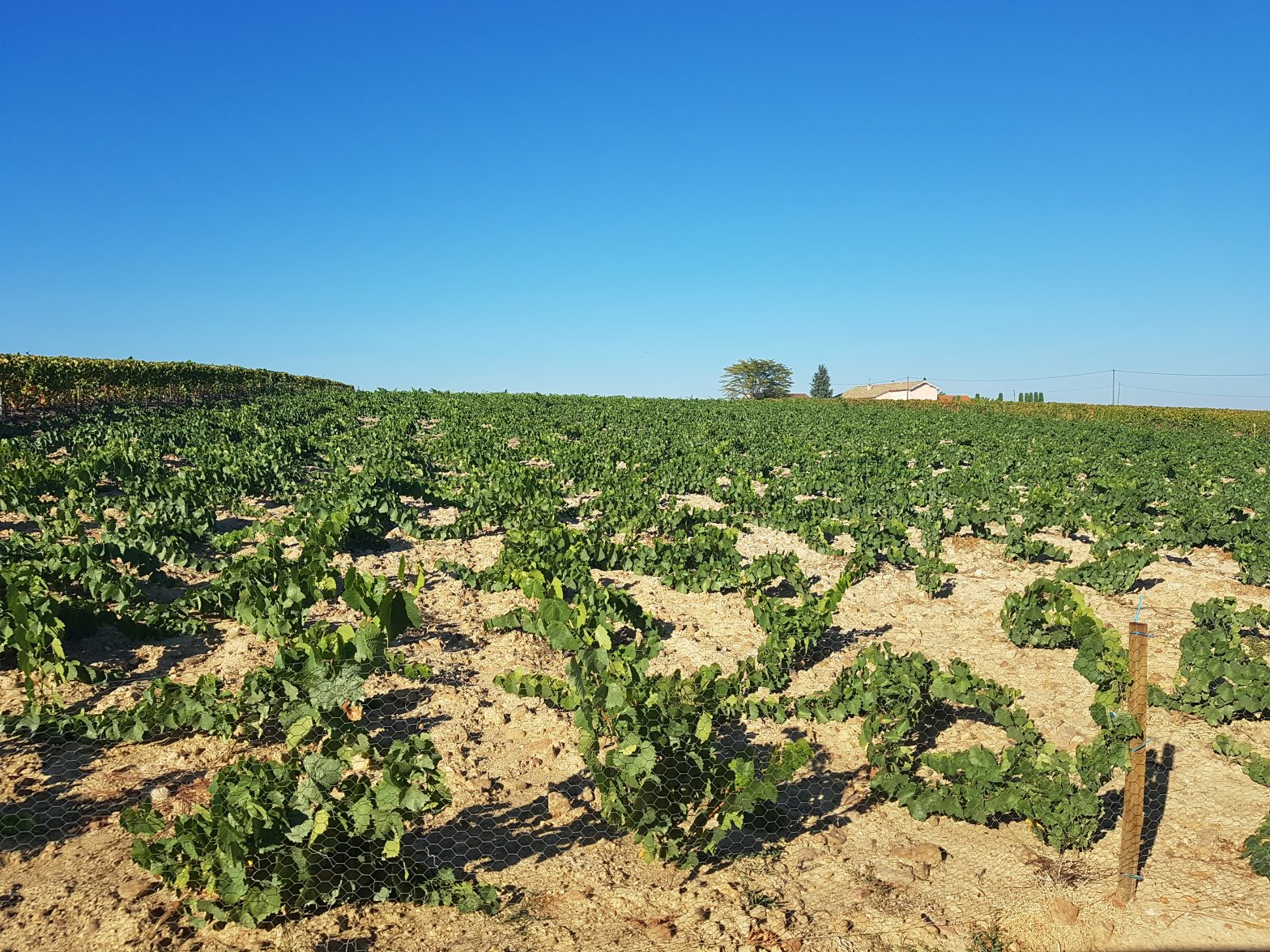 Vineyards to sell of 8.7 HA - beaujolais-en