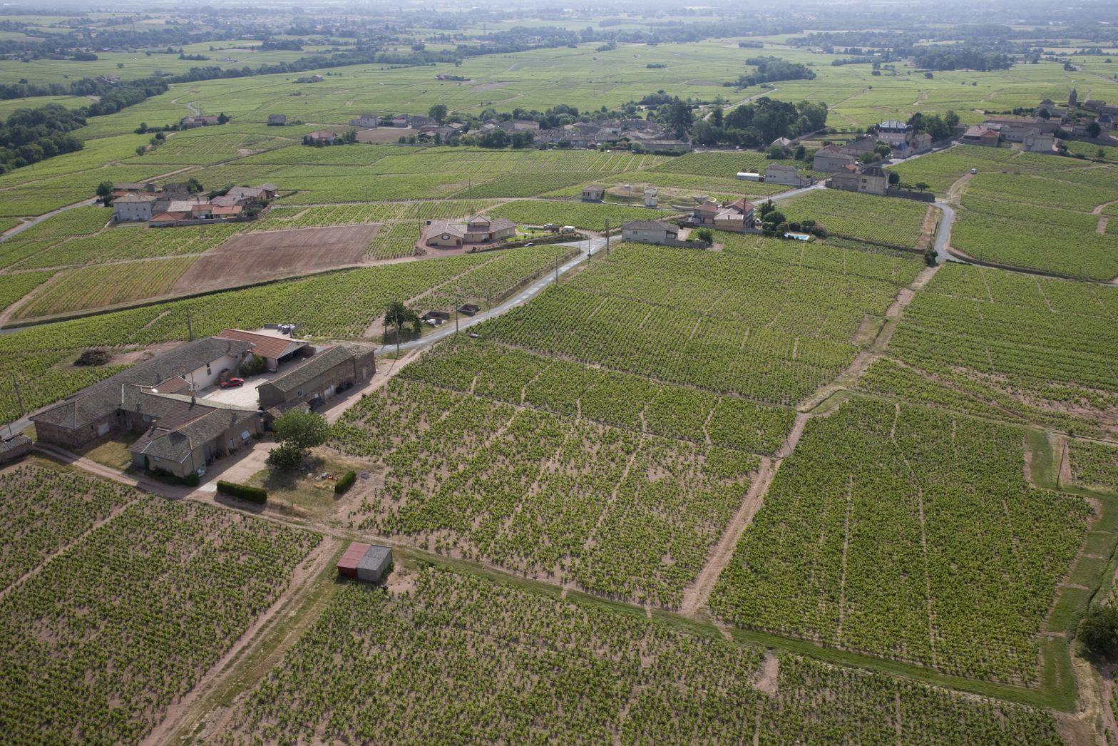 Wine Estates to sell of 14 HA - beaujolais-en