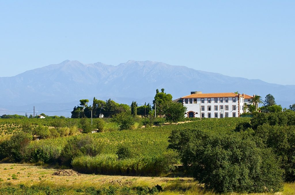 Wine Estates to sell of 40 HA - languedoc-en