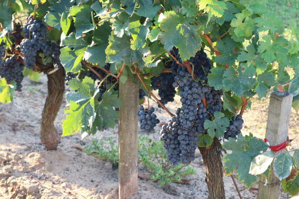 Propriété viticole à vendre de 0.68 HA - Bordeaux - 18240 - fr