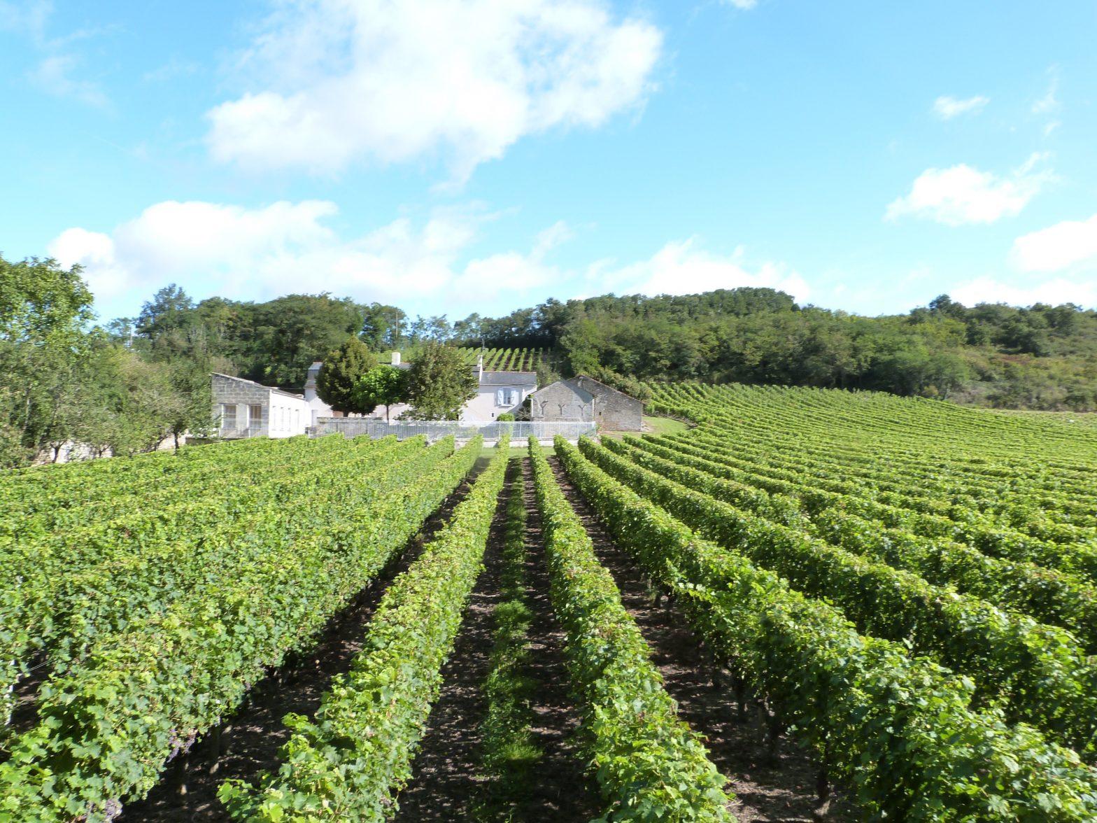 Propriété viticole à vendre de 1.95 HA - Loire - 473 - fr