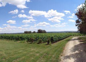 Propriété viticole à vendre de 10.3 HA - Bordeaux - 18154 - fr