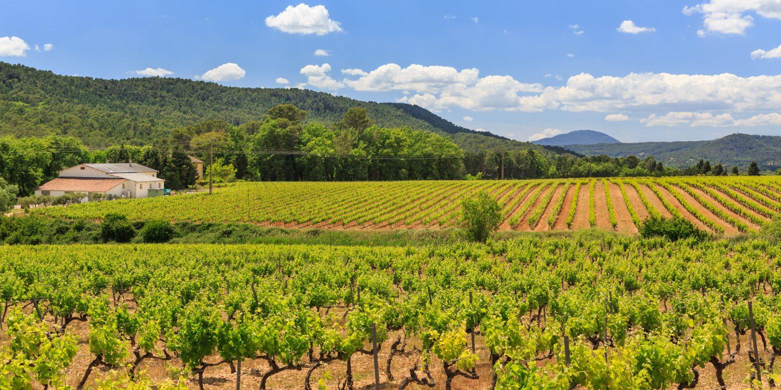 Propriété viticole à vendre de 10 HA - Provence - 632P - fr