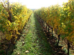 Propriété viticole à vendre de 11 HA - Bordeaux - 16203 - fr