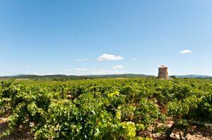 Propriété viticole à vendre de 120 HA - Languedoc - 1498LR  - fr