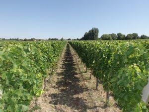 Propriété viticole à vendre de 14.5 HA - Bordeaux - 18125 - fr