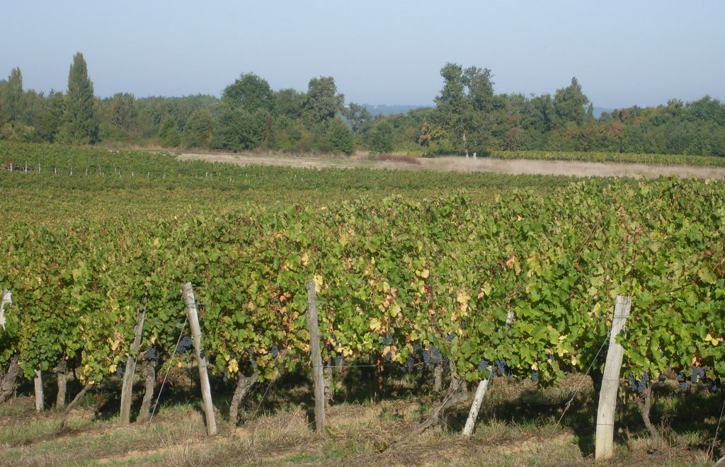 Propriété viticole à vendre de 16 HA - Bordeaux - 9092 - fr