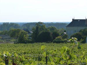 Propriété viticole à vendre de 17 HA - Loire - 15046 - fr