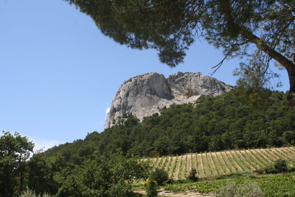 Propriété viticole à vendre de 17 HA - Vallée du Rhone - 1777CDR - fr