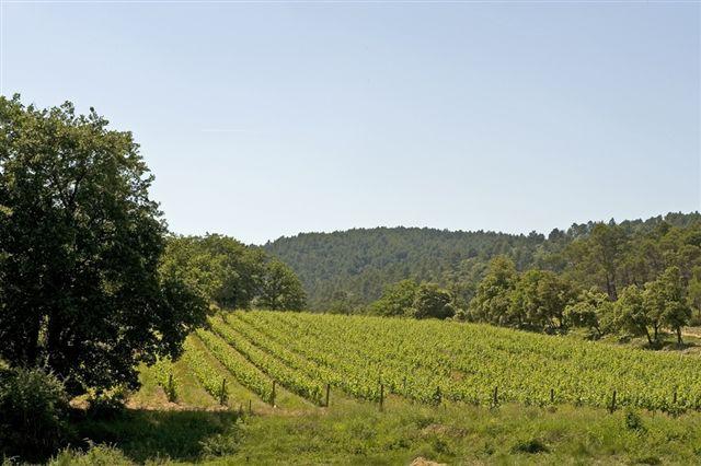 Propriété viticole à vendre de 170 HA - Provence - 232P - fr