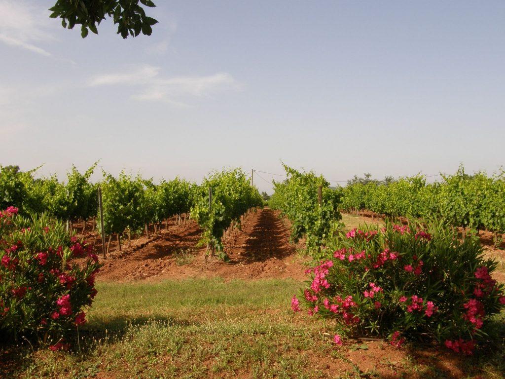 Propriété viticole à vendre de 18 HA - Provence - 347P - fr