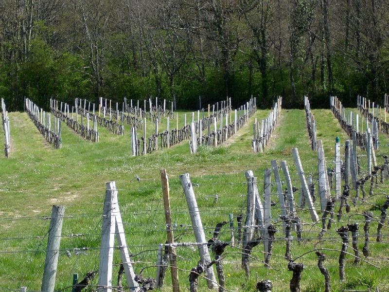 Propriété viticole à vendre de 19 HA - Bordeaux - 9043 - fr
