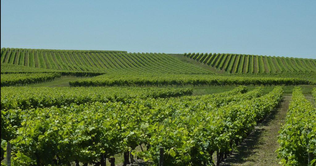 Propriété viticole à vendre de 19 HA - Cognac - 15115 - fr