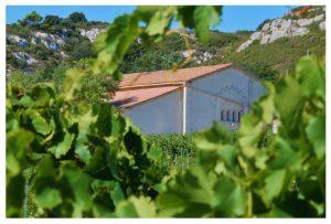 Propriété viticole à vendre de 190 HA - Languedoc - 519LR - fr