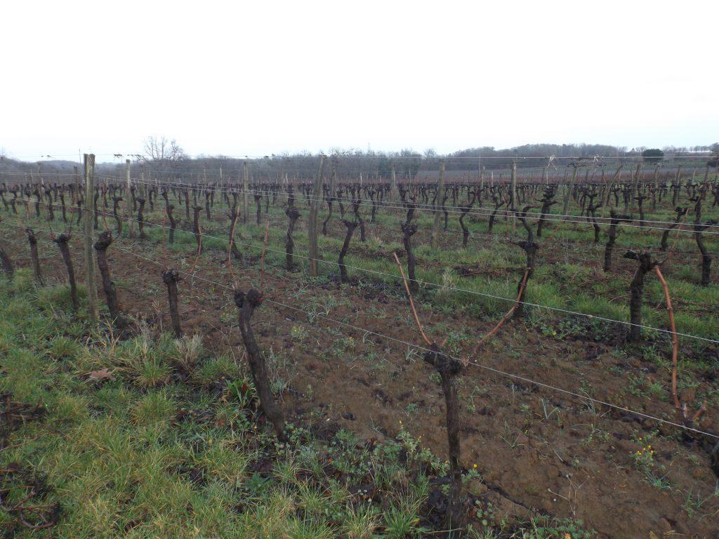 Propriété viticole à vendre de 20 HA - Bordeaux - 17265 - fr