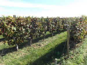 Propriété viticole à vendre de 20 HA - Bordeaux - 18134 - fr