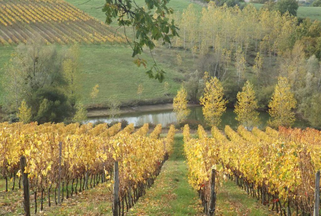 Propriété viticole à vendre de 20 HA - Bordeaux - 9081 - fr