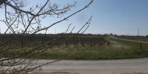 Propriété viticole à vendre de 20 HA - Bordeaux - 9084 - fr
