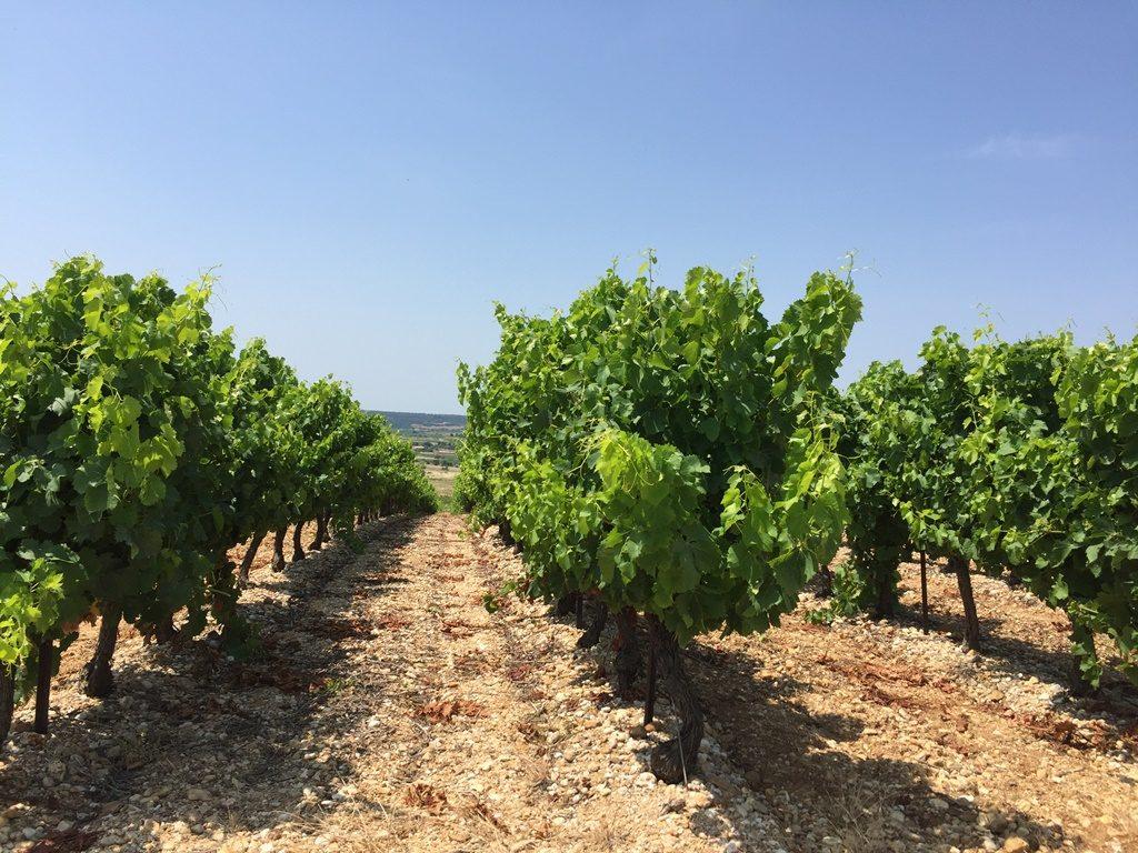Propriété viticole à vendre de 20 HA - Languedoc - 1903LRBIS - fr