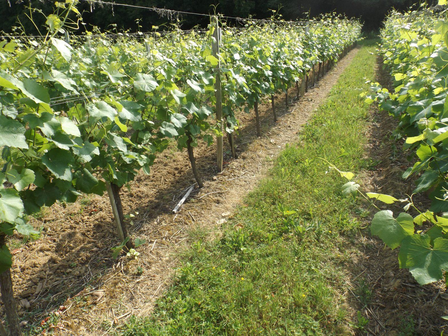 Propriété viticole à vendre de 21 HA - Bordeaux - 16131 - fr