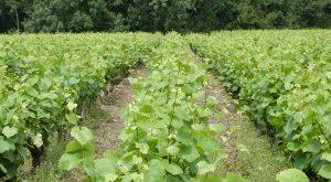 Propriété viticole à vendre de 21 HA - Loire - 15080 - fr