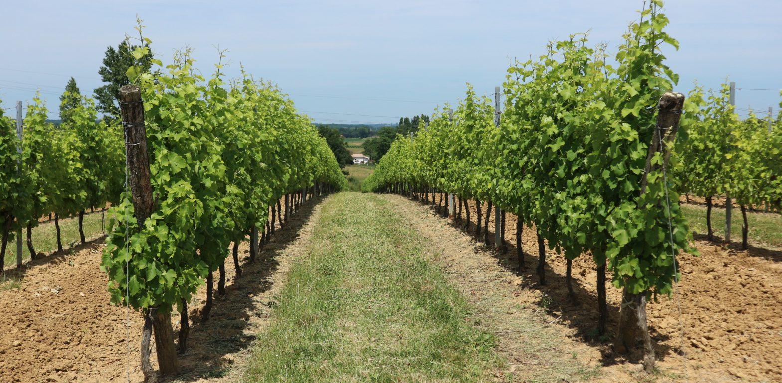 Propriété viticole à vendre de 22 HA - Bordeaux - 18117 - fr
