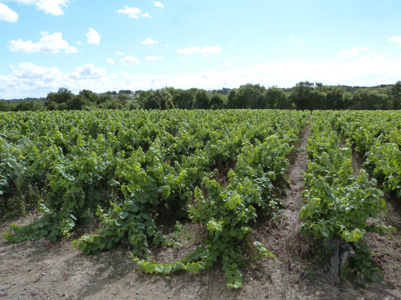 Propriété viticole à vendre de 22 HA - Loire - 18194 - fr