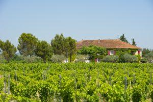 Propriété viticole à vendre de 22 HA - Vallée du Rhone - 1836CDR - fr