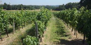Propriété viticole à vendre de 23 HA - Bordeaux - 14101 - fr