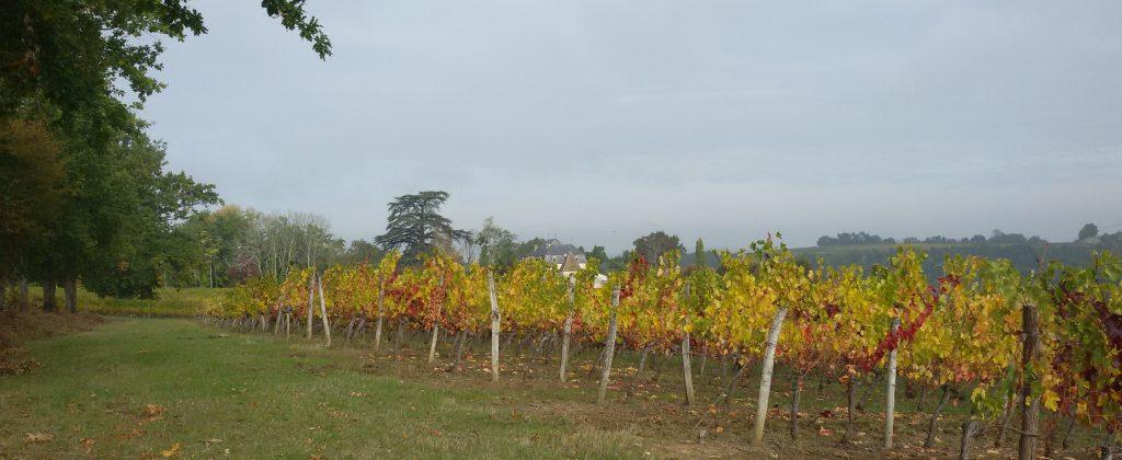Propriété viticole à vendre de 23 HA - Bordeaux - 15011 - fr