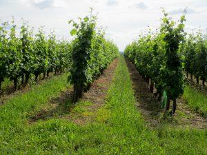 Propriété viticole à vendre de 23 HA - Loire - 17094 - fr