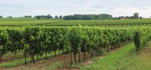 Propriété viticole à vendre de 26 HA - Bordeaux - 18143 - fr