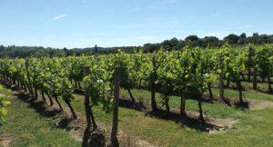 Propriété viticole à vendre de 27 HA - Bordeaux - 18129 - fr