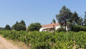 Propriété viticole à vendre de 28 HA - Vallée du Rhone - 1538CDR - fr