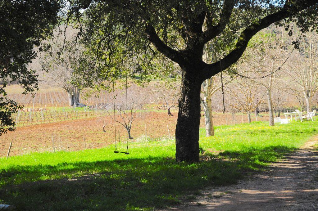 Propriété viticole à vendre de 30 HA - Provence - 602P - fr