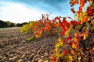 Propriété viticole à vendre de 30 HA - Vallée du Rhone - 1902CDR - fr