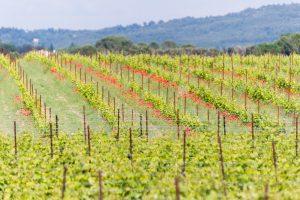 Propriété viticole à vendre de 32.5 HA - Vallée du Rhone - 1921CDR - fr