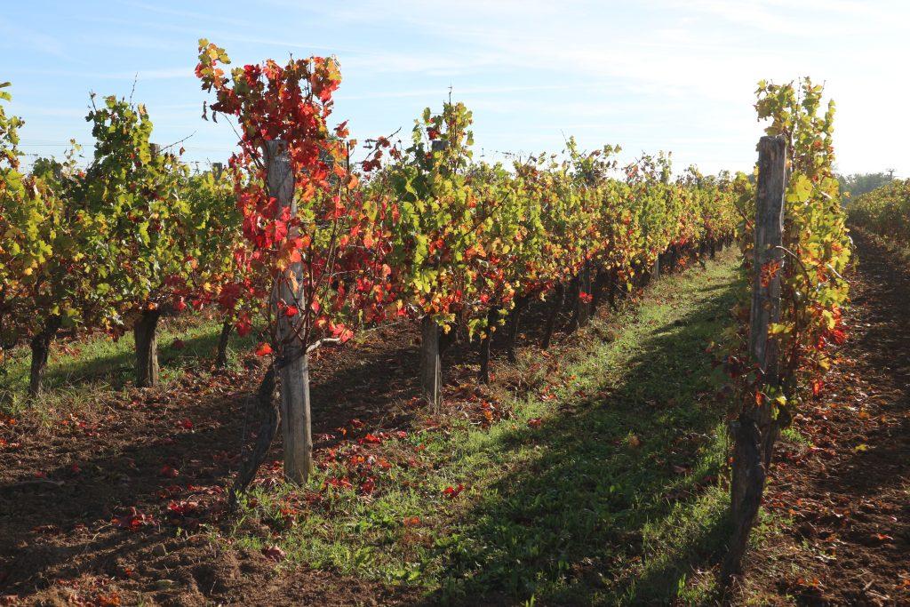 Propriété viticole à vendre de 32 HA - Bordeaux - 18047 - fr