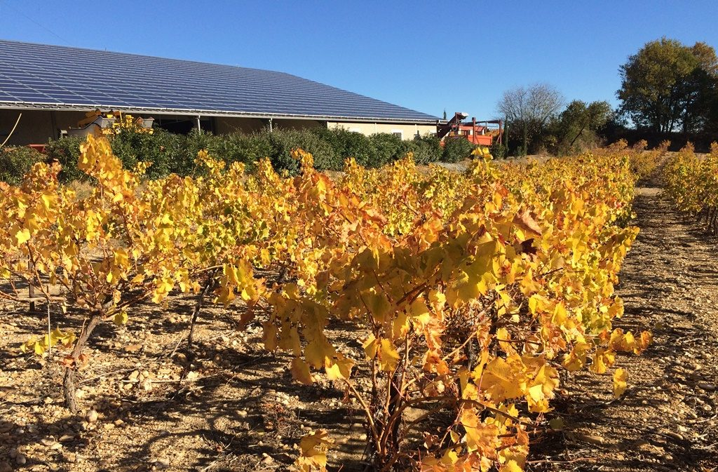 Propriété viticole à vendre de 35 HA - Languedoc - 1925LR - fr