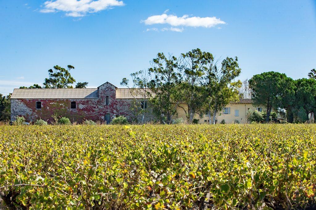 Propriété viticole à vendre de 37 HA - Languedoc - 1892LR - fr