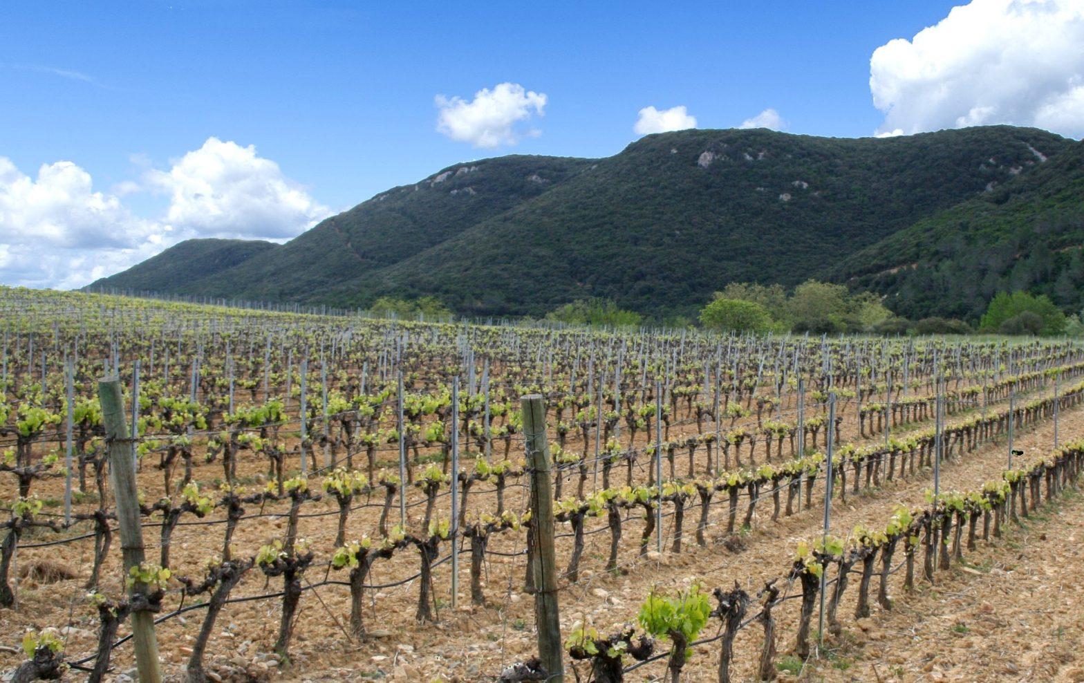 Propriété viticole à vendre de 38 HA - Languedoc - 1819LR - fr