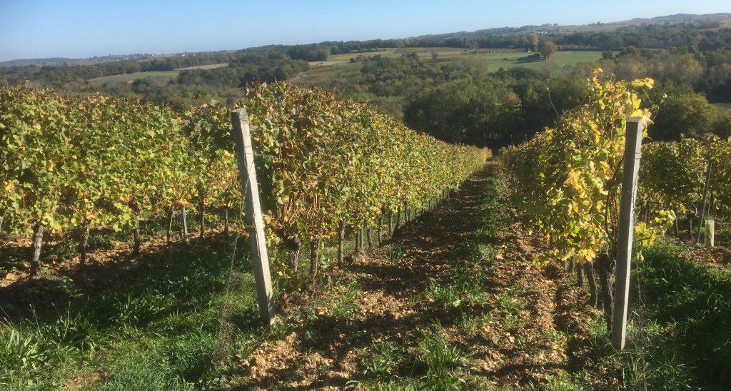 Propriété viticole à vendre de 40 HA - Bordeaux - 18205 - fr