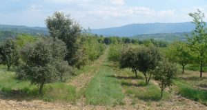Propriété viticole à vendre de 43 HA - Sud-Ouest - 2009SO - fr
