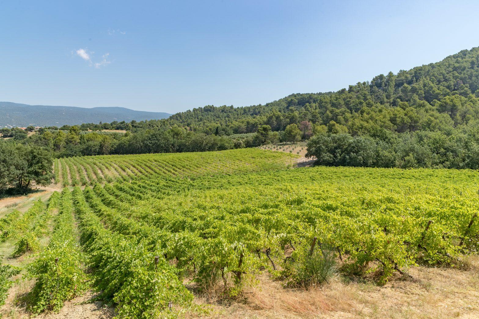 Propriété viticole à vendre de 45 HA - Vallée du Rhone - 2024CDR - fr