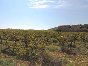 Propriété viticole à vendre de 5.6 HA - Vallée du Rhone - 1763CDR - fr