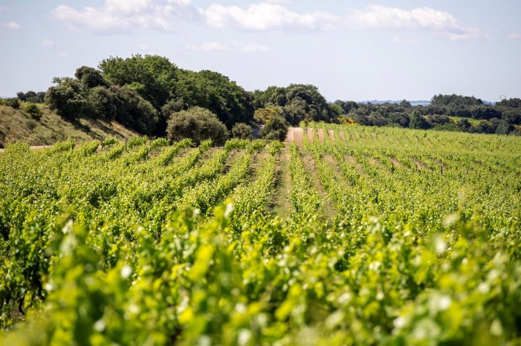Propriété viticole à vendre de 55 HA - Vallée du Rhone - 1549CDR  - fr